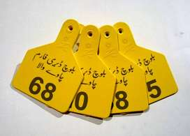 Ear Tags, Zee Tags / AllFlex Tags with laser print