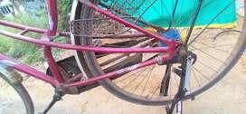 Lady BIRD cycle 2000