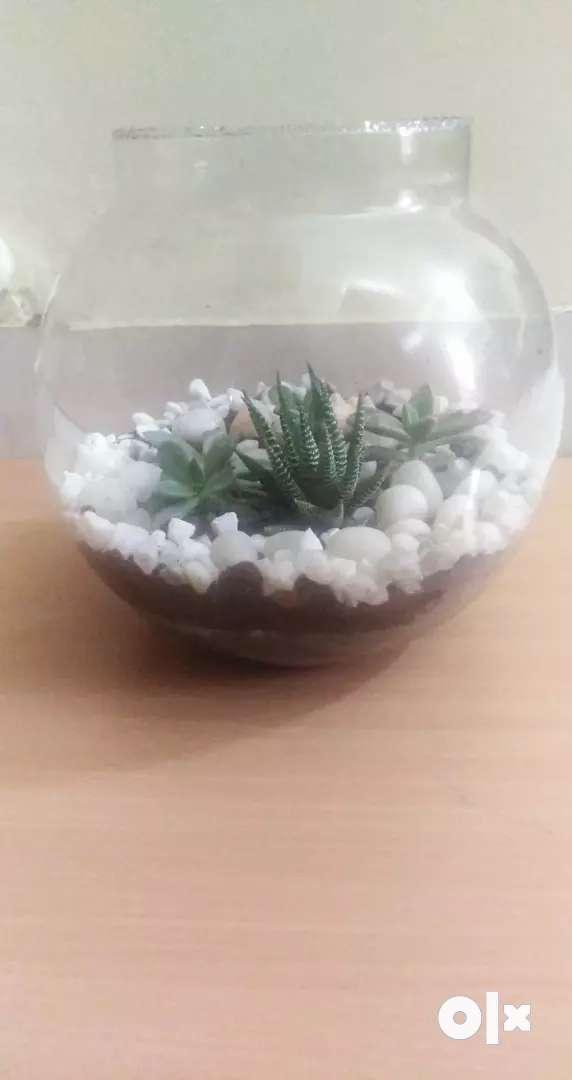 Terrarium and planters(price and design can be customised) 0