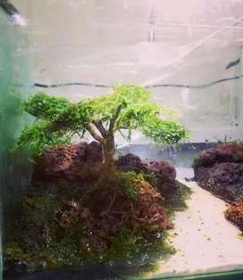 Jual Aquarium/Aquascape