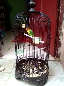 Lovebird josan jual burungnya aja