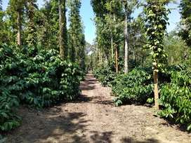 10 Acres of highly well maintained coffee estate for sale