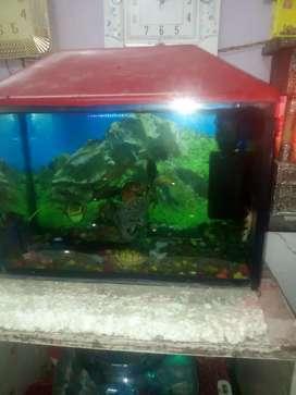 Fish accurint sale ke liye and boll   fish18 boll 10