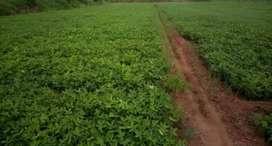Agricultural land , 2 kms from kothavalsa railway station.