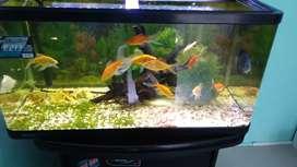 Aquarium nisso 155 liter