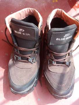 Shoes in good condition   Size- 8