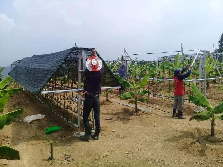 Mau investasi tanah froduktif kini hadir kavling vanili & Cavendish