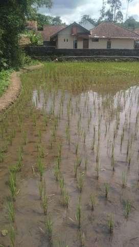 Jual murah tanah Luas  dipedesaan untuk vila atau rumah bahkan sawah