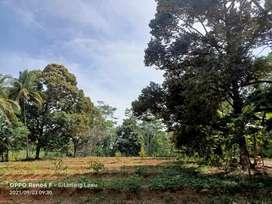 Jual kebun durian lokasi Jumantono luas 4100mtr harga 850jt nego