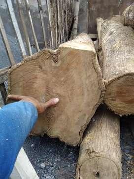 Jual kayu GLUGU, JATI,SENGON, KEMBANG