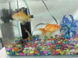 Imported Fish Aquarium