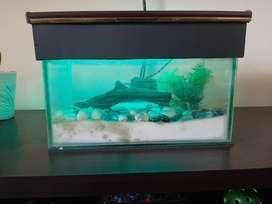 Small aquarium with all accessories