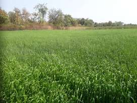 Agriculture / Farm Land for Sell Area 8.9 Acres