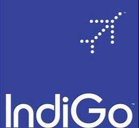 INDIGO Job Indigo Job Indigo Job INDIGO Job INDIGO AIRLINES Job Vacanc