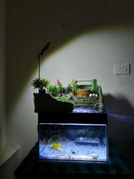 AQUARIUM FULL SET. 2×2ft WOODEN TABLE. WATER FALL  including fish.