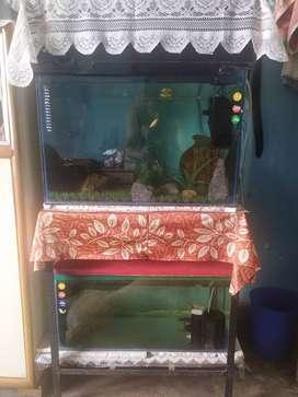 2 Aquarium of 2.5 ft with stand