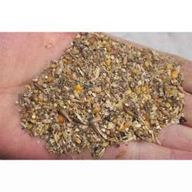 Organic Whole Grain Poultry Feed - Great for Chicks,Pullets & Breeders