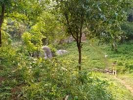 Eksoniya land with holding no.hill area 1katha 5lessa, 4.5lakhs,urgent