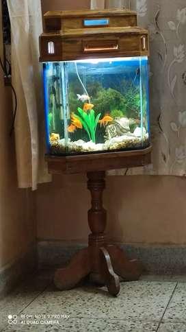 1.5 feet fish tank with sagaun stand