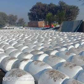 SILAGE DAIRY FARMING FEED