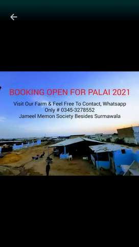 BOOKING OPEN FOR PALAI 2021