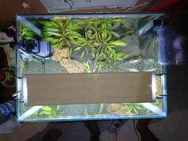 Aquascape Sederhana