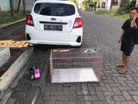New Gaes Monggo Kandang Kucing  Kandang Anjing Nyoo