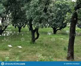 65 kanal of Agriculture land is for sale