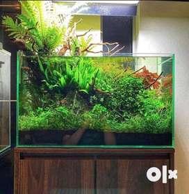 Planted aquarium full setup and solutions
