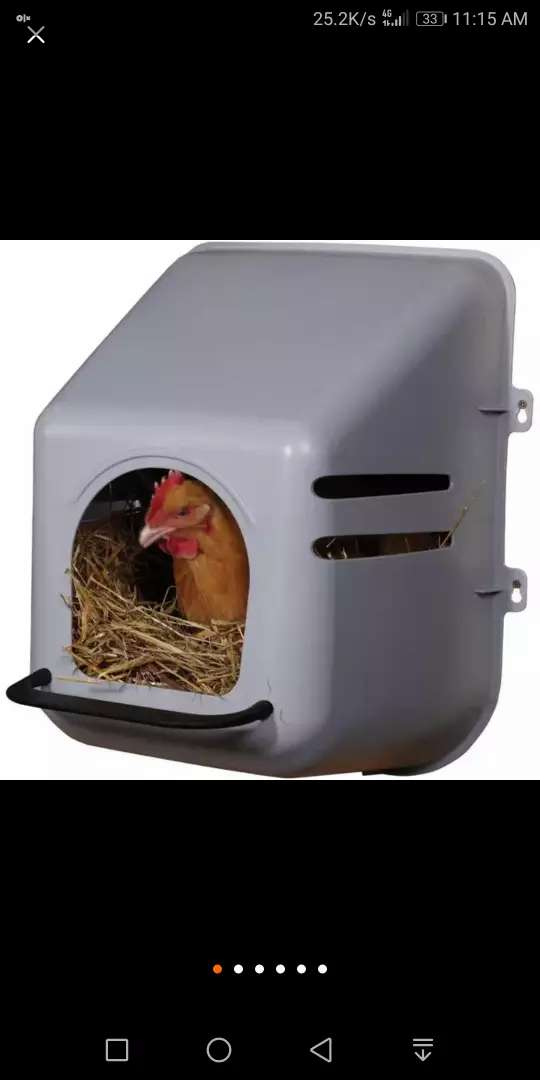 Box for lying or broody hen